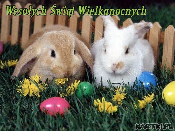 [Obrazek: wesolych_swiat_wielkanocnych.jpg]